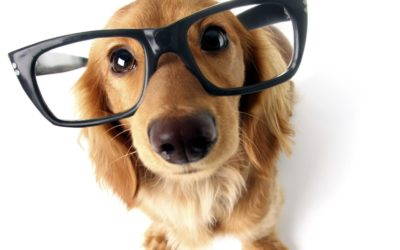 Dog Psychology vs. Human Psychology