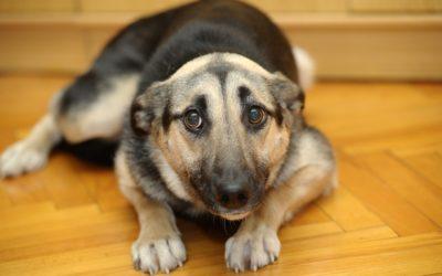 Fear's Effect on Dogs